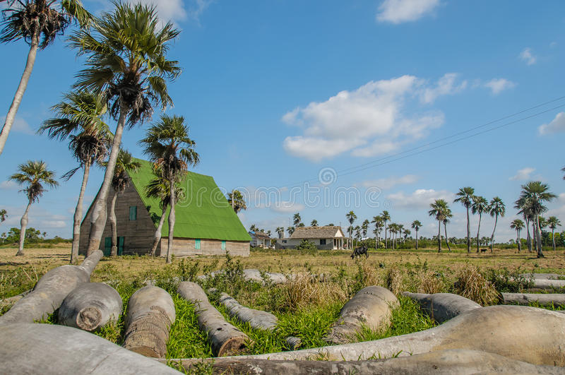 Pictures of Cuba - Pinar del Rio. Cuban lansdscape scenery with fallen palm trees against a blue cloudy sky stock photo