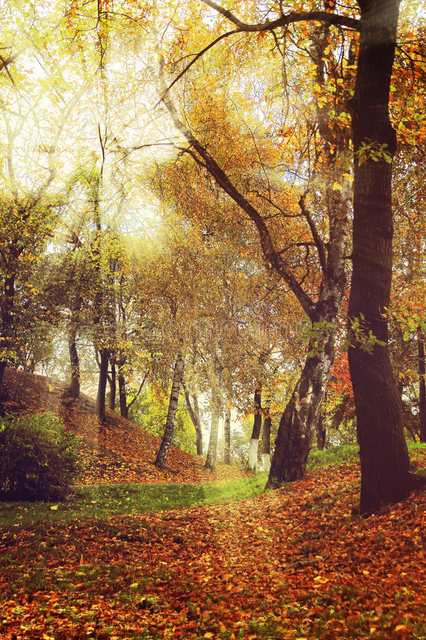 Free Picturesque Autumn Forest Scenery With Rays Of Soft Light. Stock Image - 60497301