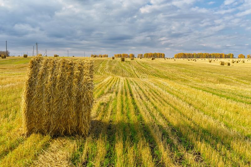 Picturesque autumn landscape with beveled field and straw bales. Beautiful agriculture background stock photos