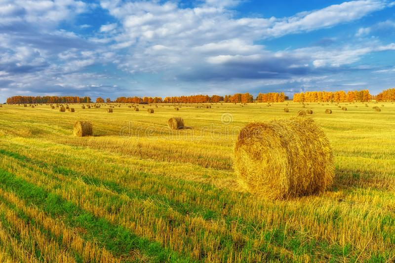 Picturesque autumn landscape with beveled field and straw bales. Beautiful agriculture background stock image