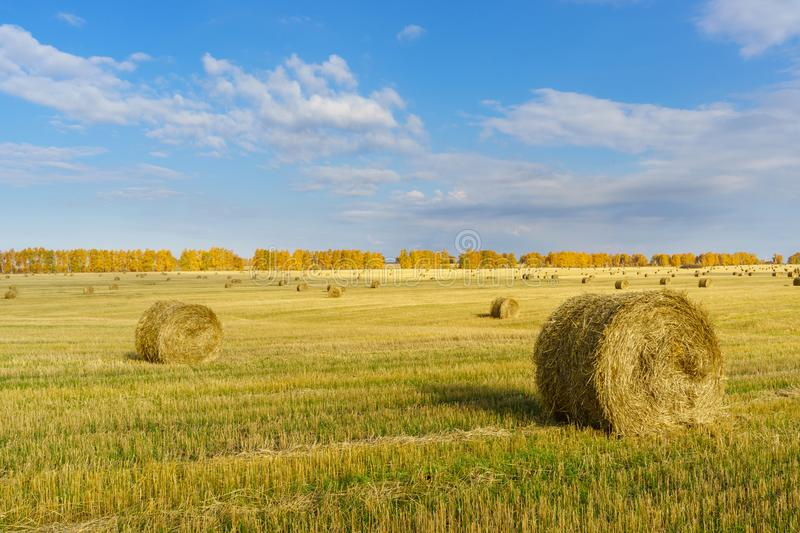 Picturesque autumn landscape with beveled field and straw bales. Beautiful agriculture background royalty free stock photos