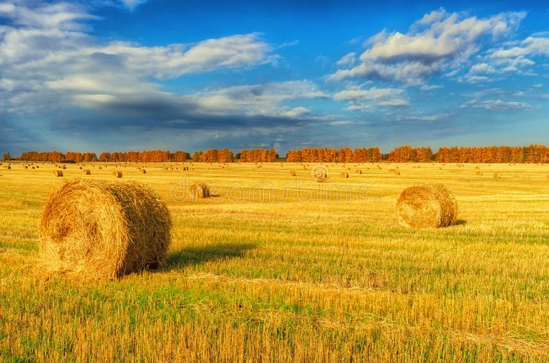 Picturesque autumn landscape with beveled field and straw bales. Beautiful agriculture background stock photography
