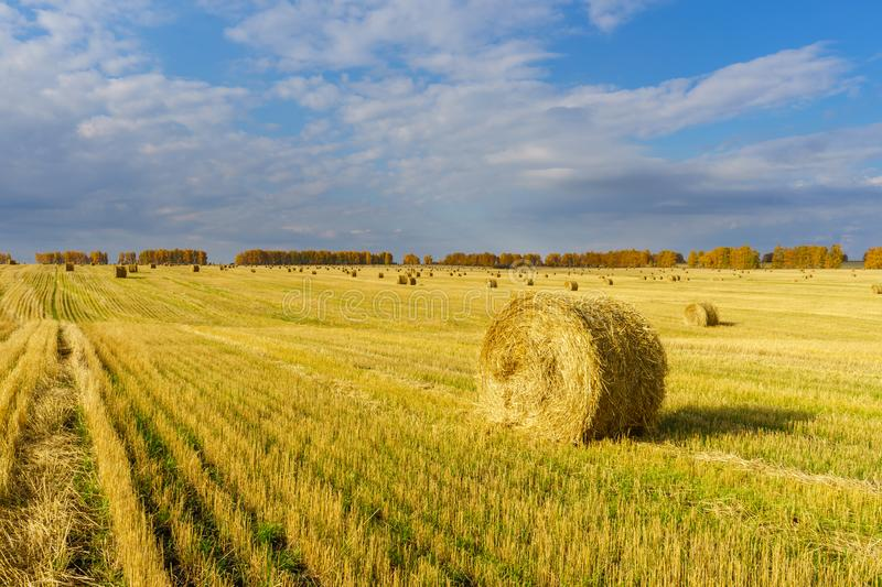 Picturesque autumn landscape with beveled field and straw bales. Beautiful agriculture background royalty free stock image