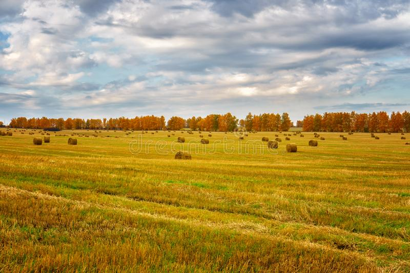 Picturesque autumn landscape with beveled field and straw bales. Beautiful agriculture background stock photo