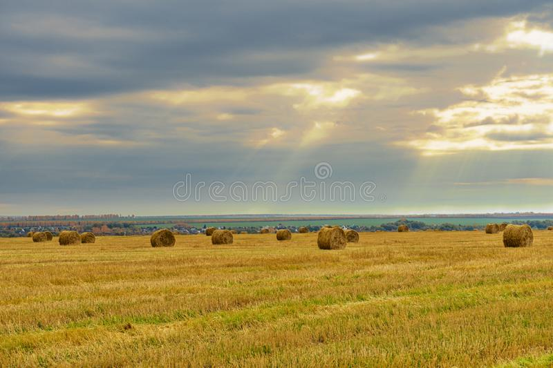 Picturesque autumn landscape with beveled field and straw bales. Beautiful agriculture background royalty free stock photography