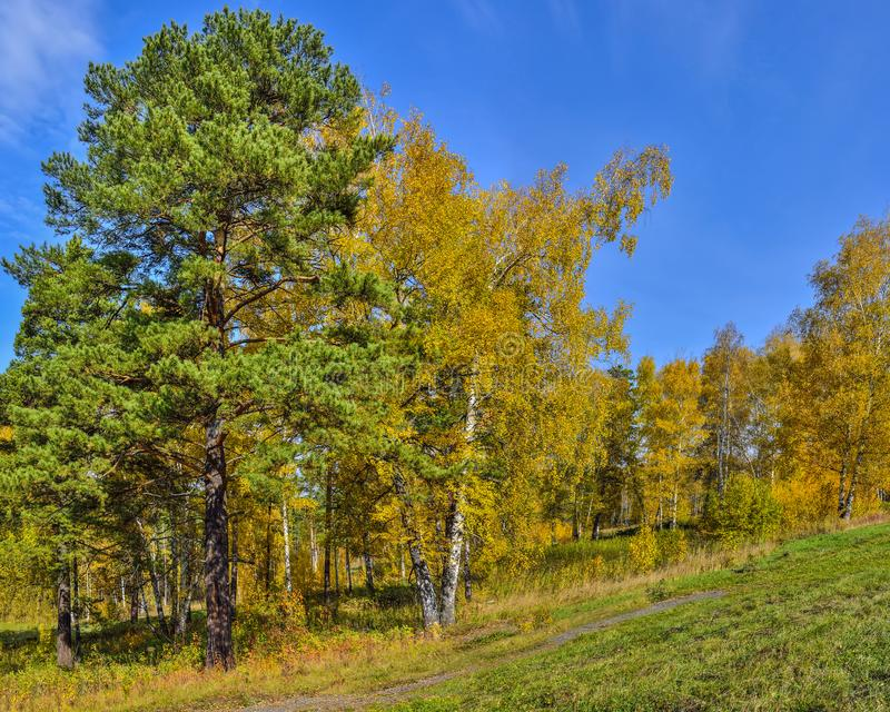 Picturesque autumn landscape in golden autumn forest on hill stock photo