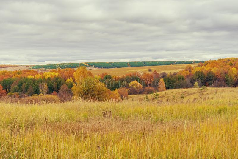 Picturesque autumn landscape in green and yellow colors. Panoramic view from hill to lowland with grove and field in cloudy day. royalty free stock image