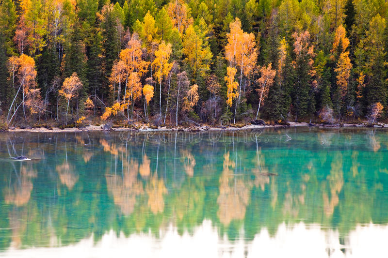 Picturesque autumn landscape of lake and tree stock photo
