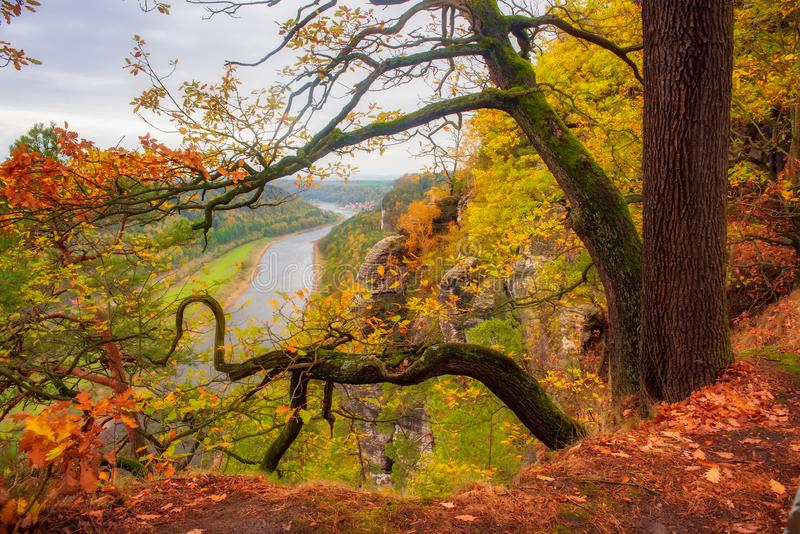 Autumn scenery with curved tree on the edge, Elbe Sandstone mountains and Elbe valley. Saxon Switzerland, Germany. Picturesque autumn scenery with curved tree on stock image