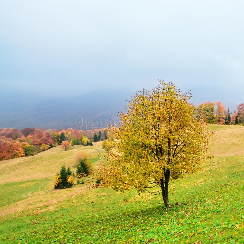 Picturesque autumn scenery in the mountains with meadow and colorful trees on foreground and fog above valley. I stock image
