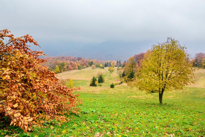 Picturesque autumn scenery in the mountains with meadow and colorful trees on foreground and fog above valley. III royalty free stock images