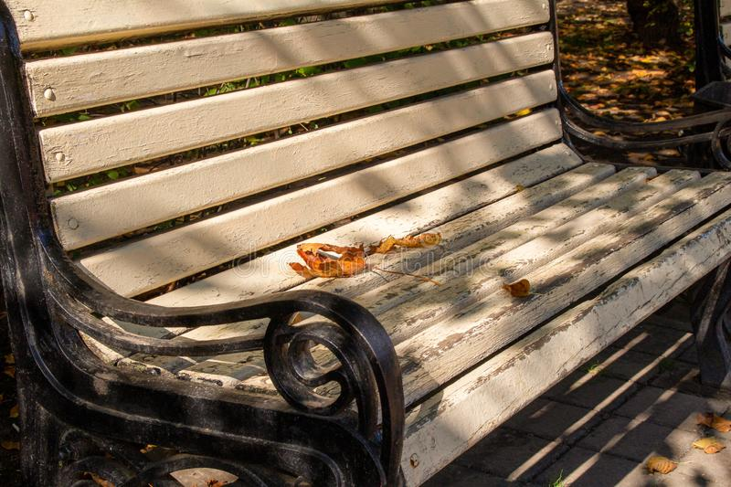 Picturesque bench in an autumn colorful park. Park outdoor lifestyle concept stock photos