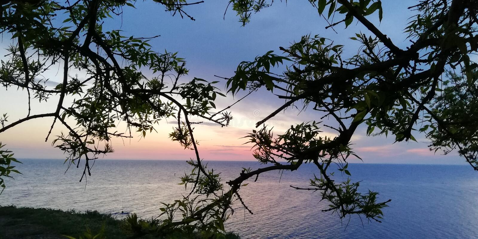 Background. The sea landscape in red, pink, blue, purple colors through the branches of trees and bushes. stock photos