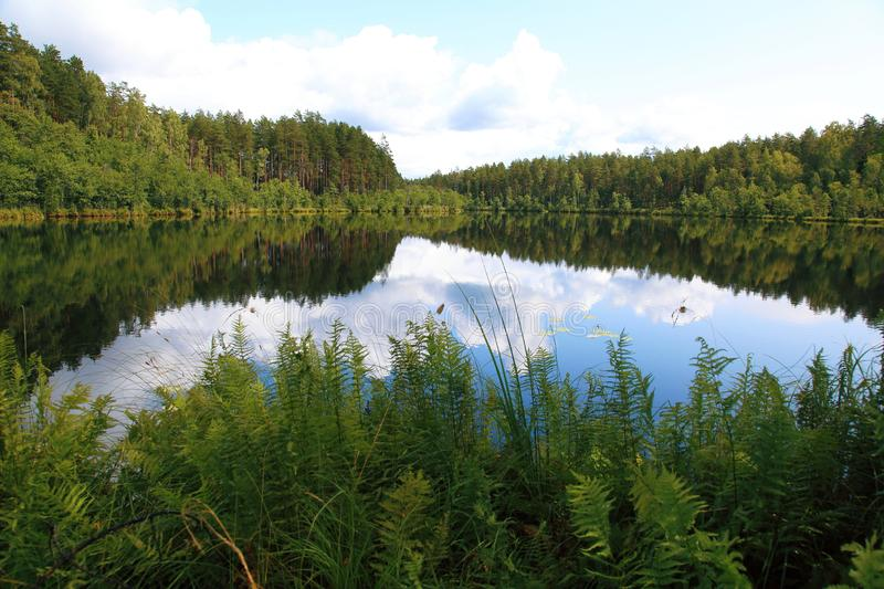 Picturesque bright landscape with the view of the corner of the forest lake stock images