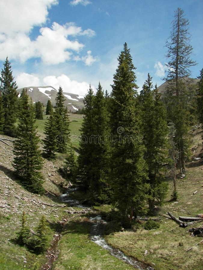 Picturesque countryside. Scenic view of Conifer trees in picturesque countryside landscape with mountains in background under cloudscape royalty free stock photo