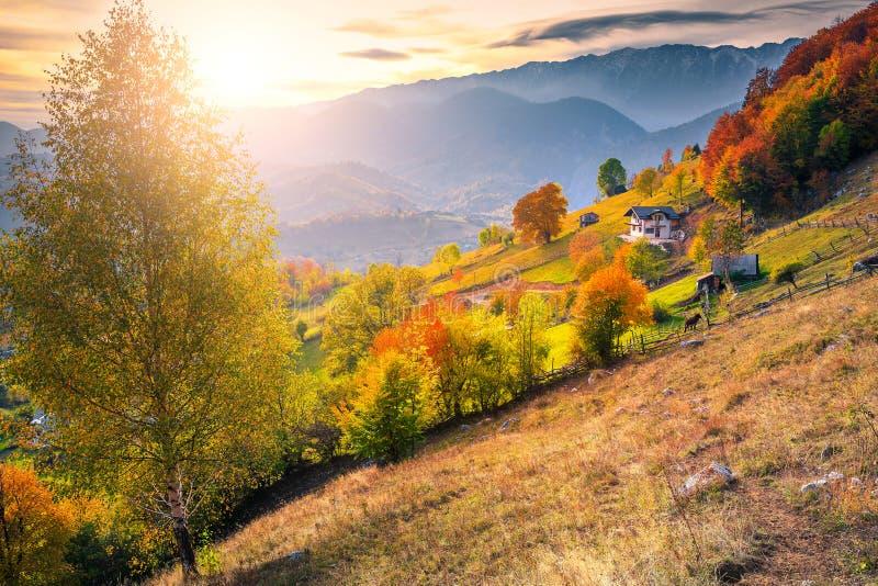 Amazing colorful autumn landscape, Magura village, Brasov county, Transylvania, Romania. Picturesque countryside autumn landscape, rural village and colorful royalty free stock photos