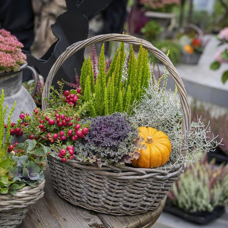 Picturesque decoration for home. Autumn wicker basket with autumn flowers, pumpkins and berries. Harvest holidays. Colorful picturesque decoration for home stock photos