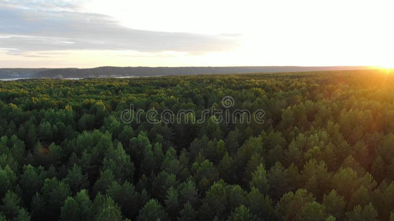 Picturesque green dense forest tree tops lit by morning sun. Picturesque green dense endless forest tree tops lit by bright rising sun light under cloudy sky stock photography