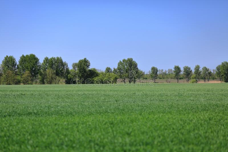 A picturesque green meadow on a Sunny day royalty free stock image