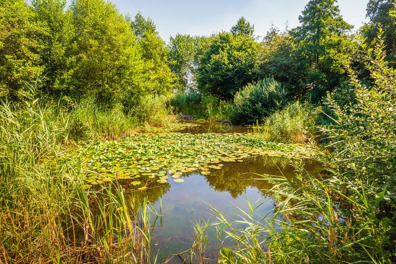 Picturesque image of a natural pond royalty free stock photo