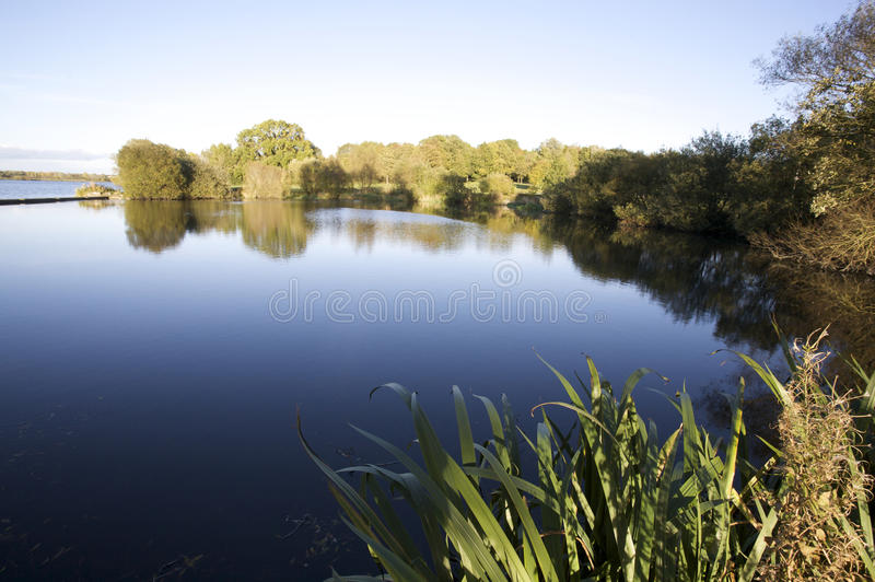 Download Picturesque lake stock photo. Image of woodland, reflected - 24479032