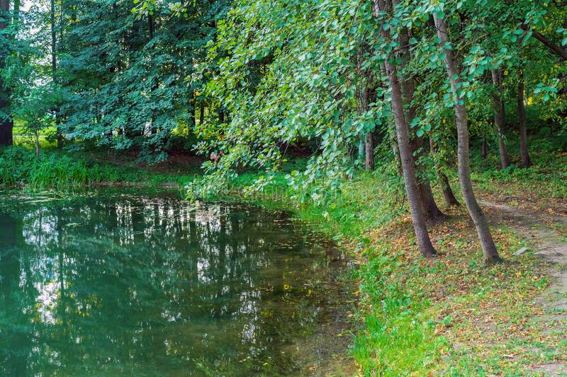 Picturesque lake among green trees. Forest pond surrounded by trees stock photos