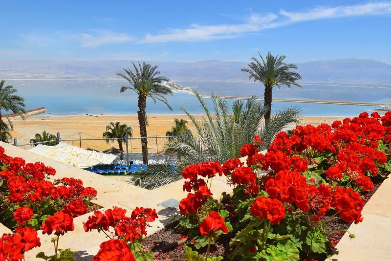 Picturesque landscape at the Dead Sea, Israel shore stock photos