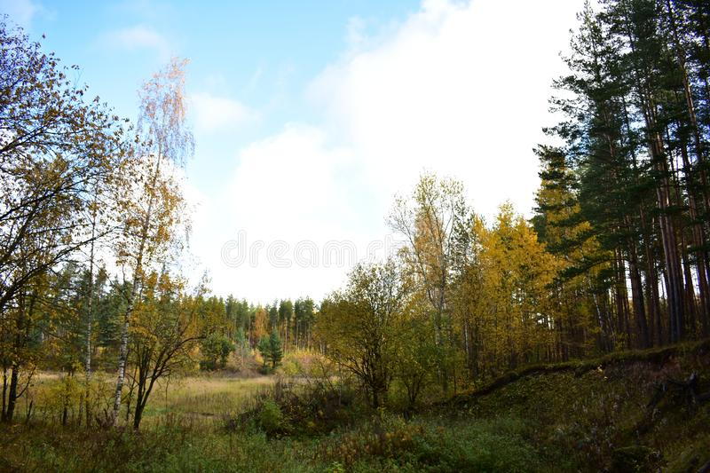 Picturesque landscape forest field trees on high slope, grass, sky. Clouds royalty free stock photography
