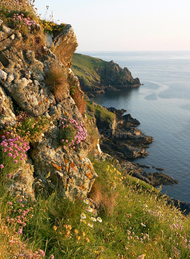 Picturesque landscape with wildflowers, cornwall, south england stock images