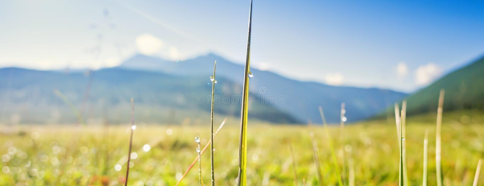 Picturesque landscape, Wild meadow grass, dew drop on leaf, morning dawn sunshine royalty free stock images