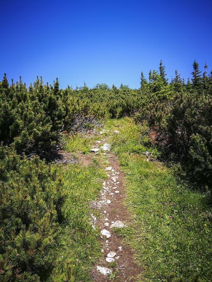 Mountain trail in Carpathian mountains , Romania stock photos