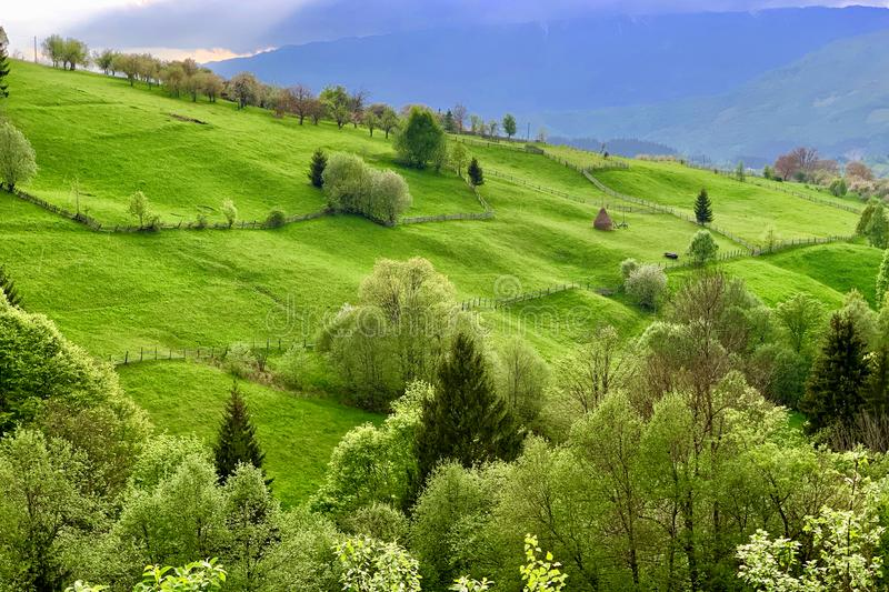 Picturesque natural landscape of green grass meadows royalty free stock photo