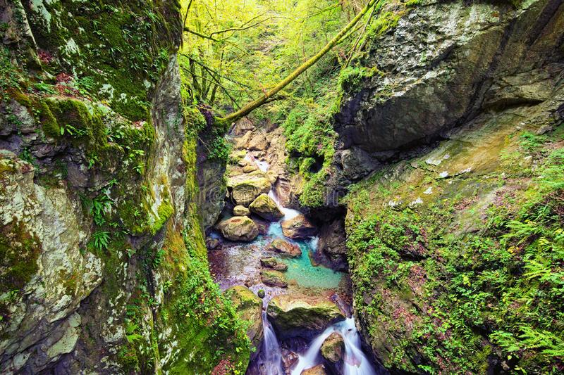 Picturesque nature landscape of Tolmin Gorge Tolminska Korita. Fast mountain river flows between the high mountains. royalty free stock images