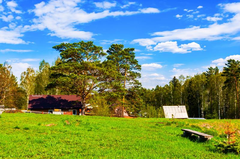 A picturesque place in the forest. Summer day. stock photo