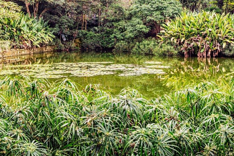 Pond in a botanical garden in Medellin, Antioquia, Colombia. Picturesque pond in a botanical garden in Medellin, Antioquia, Colombia royalty free stock photos