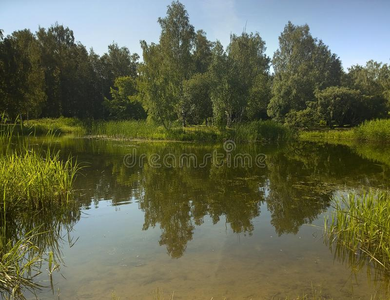 A picturesque pond with overgrown green banks in the city Park. royalty free stock images