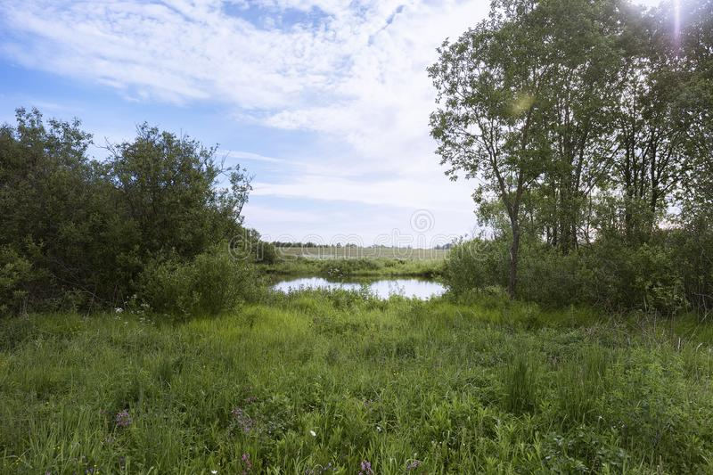 A picturesque pond with overgrown green banks and clouds in the blue sky. stock image