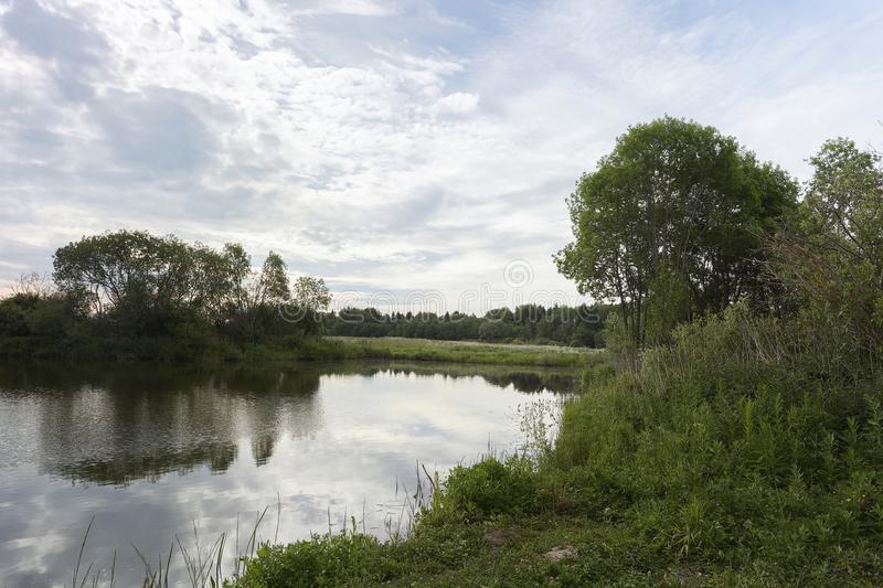 A picturesque pond with overgrown green banks and clouds in the blue sky. royalty free stock image