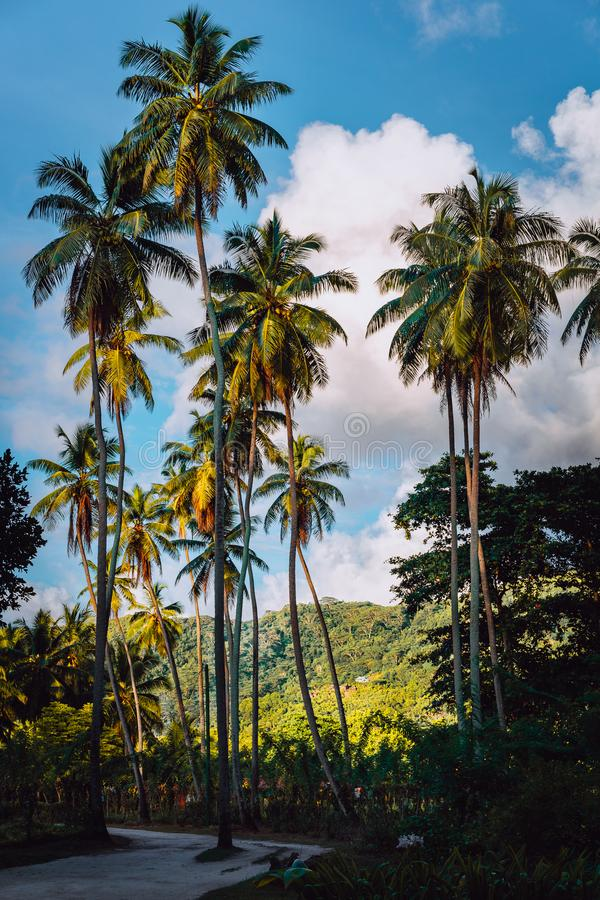 Picturesque road among vanilla plantation with coconut trees, La Digue, Seychelles. Warm sunset light.  stock photography
