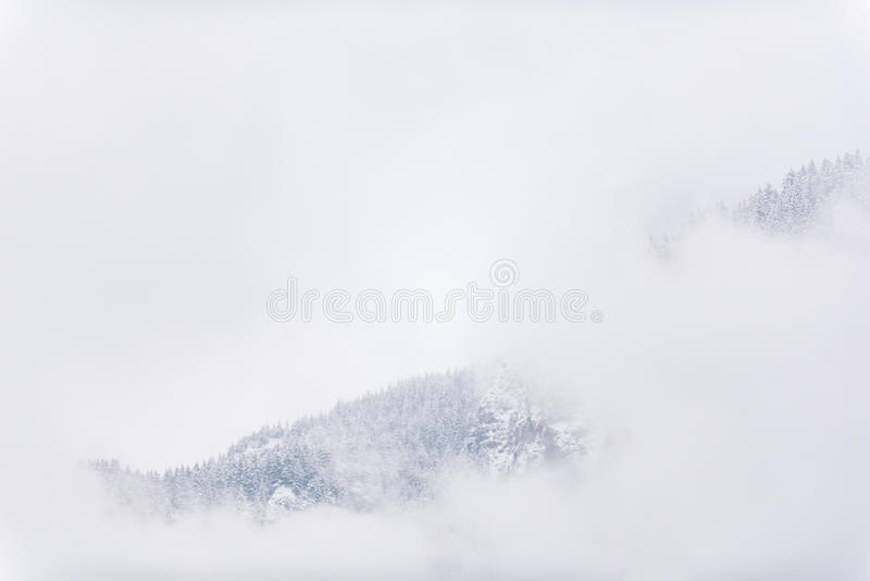 Picturesque rock covering with wood. Pleasant view over dense pine trees growing on snowy mountain clouding capped in United States royalty free stock photo