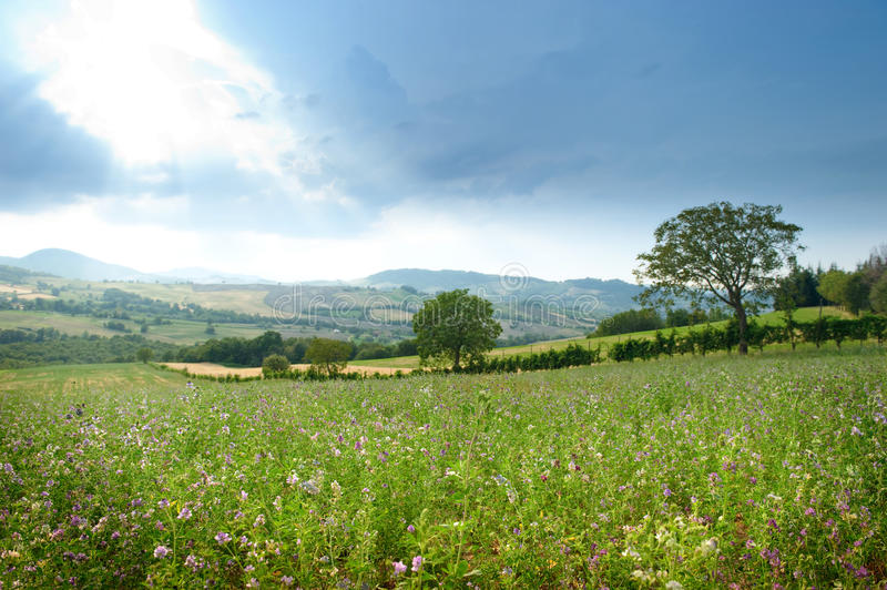 Picturesque rural landscape. Of northern Italy, trees and hedge in foreground, springtime scene royalty free stock photography