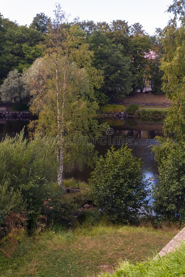 The picturesque shore of the pond with birch stock images