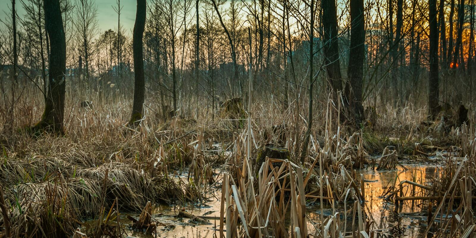 Spring swamp on the outskirts of the city. A picturesque spring marsh on the outskirts of the city stock image
