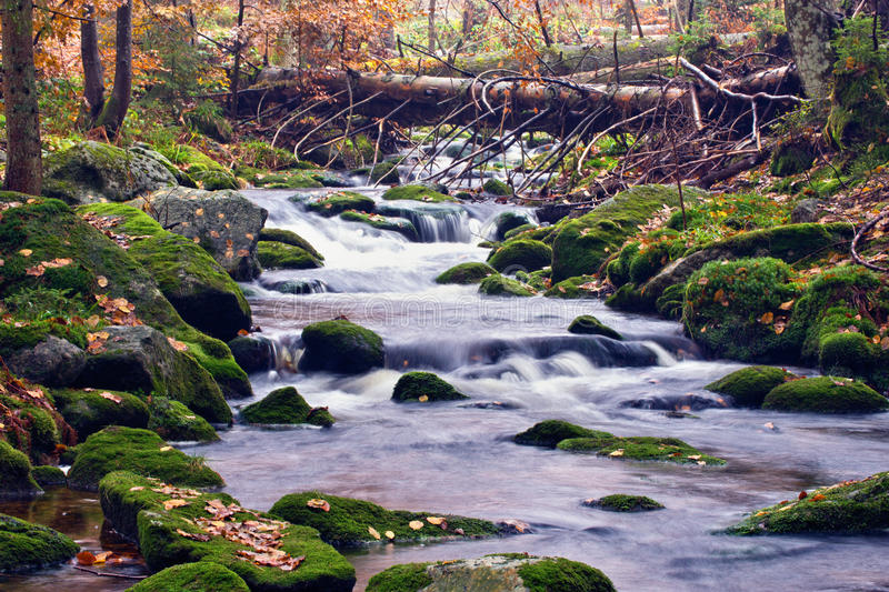 Download Picturesque stream in wood stock photo. Image of outside - 11748952