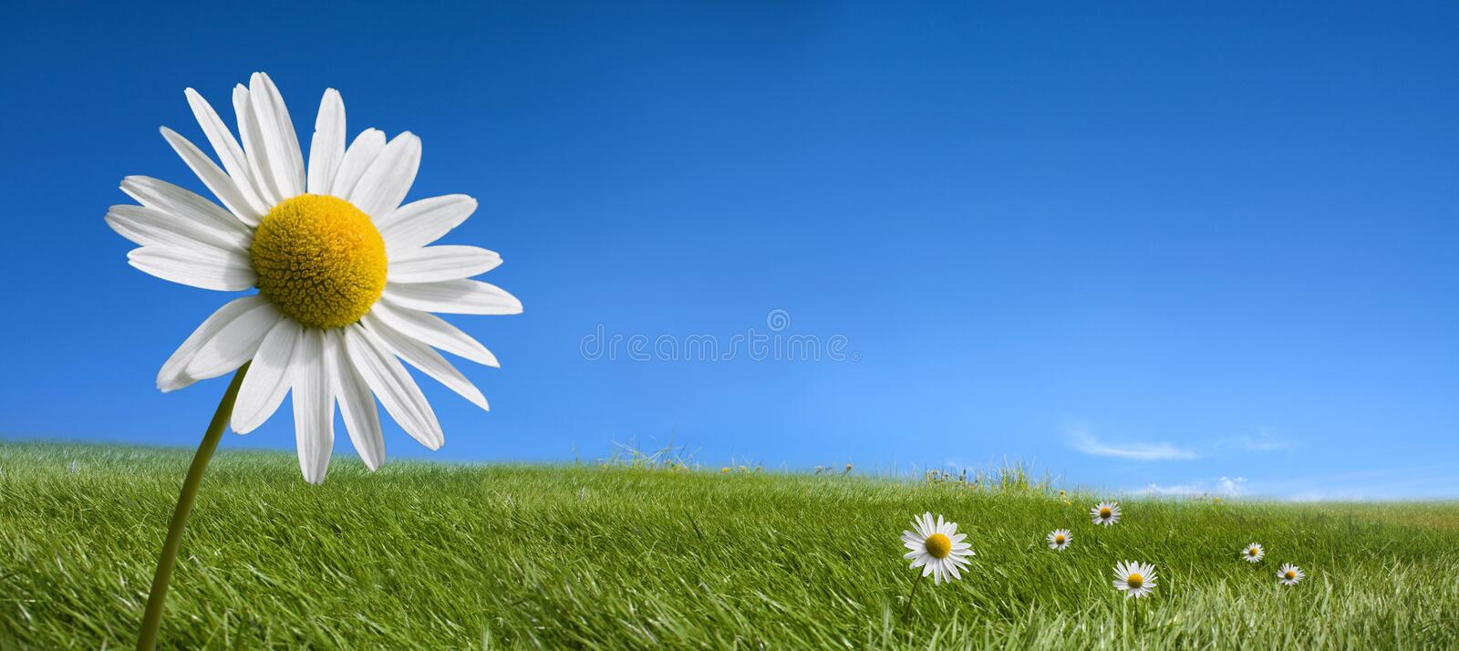 Picturesque summer landscape and daisy flowers royalty free stock photos