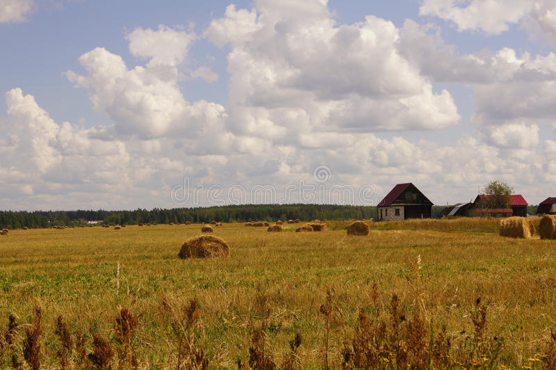 Picturesque view of the beautiful green grass field and hay sheafs under the blue cloudy sky and sunshine. Moscow suburbs, Russia. Royal view of the beautiful royalty free stock images
