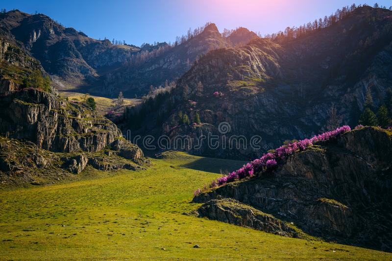 Picturesque view of spring landscape of green meadows and rocky mountains in sunny day. Desert expanses, natural beauty. Of wildlife stock image