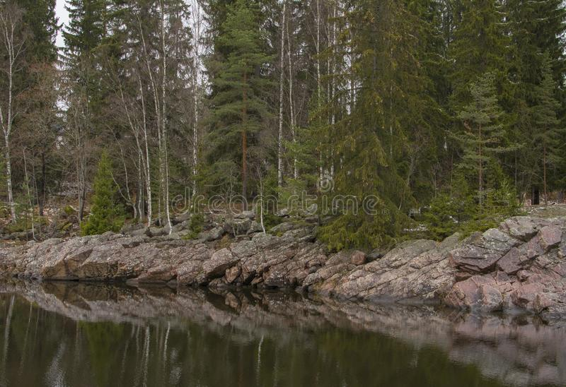 Green spruces on the stone shore of the lake. Picturesque views of nature near the city of Imatra, Finland stock images