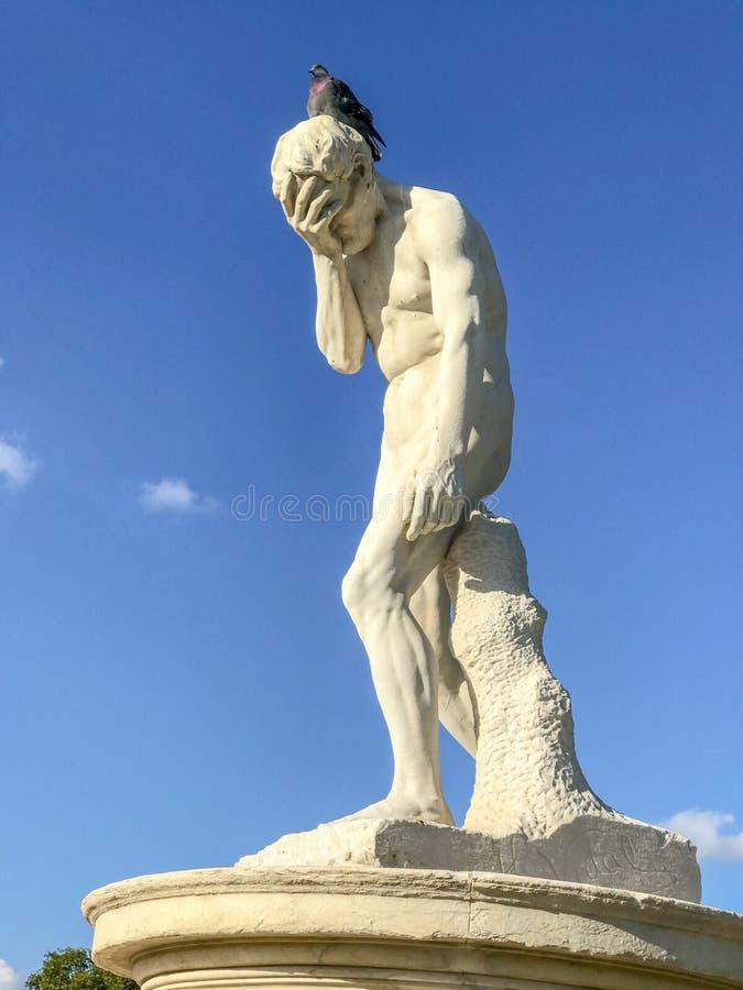 Pidgeon на скульптуре Henri Vidal Каина, Tuileries, Парижа стоковое фото rf
