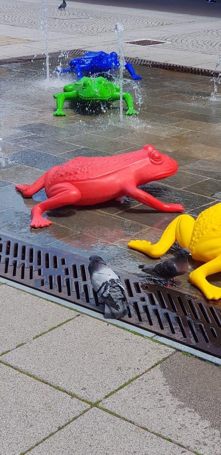 Pidgeon против лягушек стоковые фотографии rf